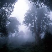 棲蘭山神木群