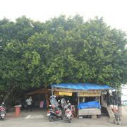 東港榕樹公園
