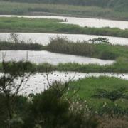 無尾港濕地